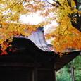 景徳院  黄葉