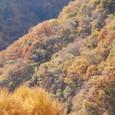 天目   黄金色の山々