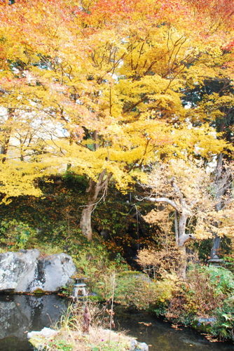 景徳院  庭園