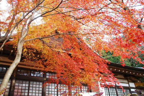 景徳院   紅葉