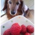 イチゴ大好きです